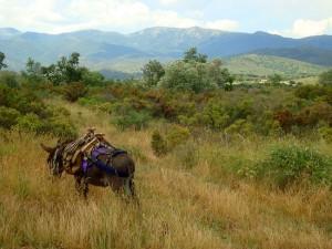 Eselwandern-Pause