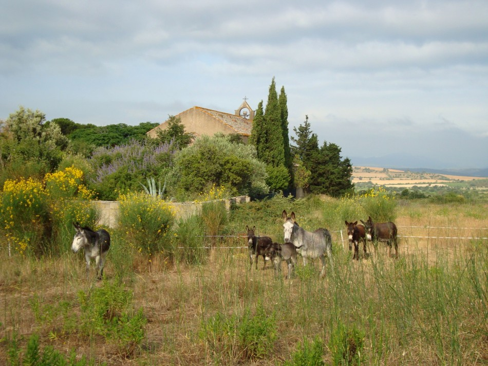 Esel in Katalonien