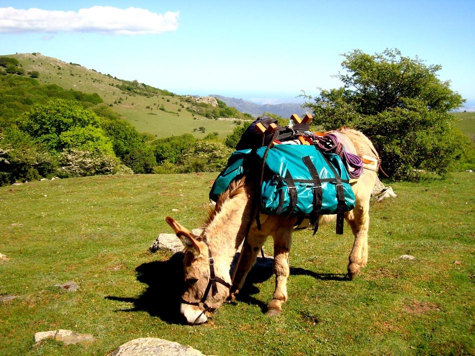 burros trekking spanien