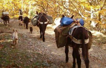 """5 – 7 Day Trekking: """" Albera-Mountain-Tour """""""