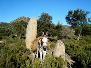 Menhir de la murtra 2