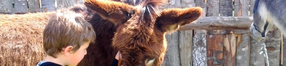 Taller de hípica con los burros