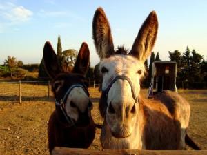 Schnupperwanderung mit Eseln