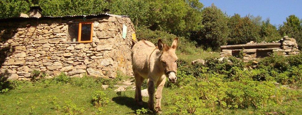 Eseltrekking und Eselwandern