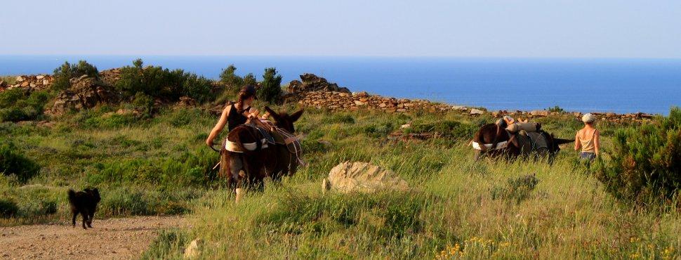 Paseos y senderismo con burro