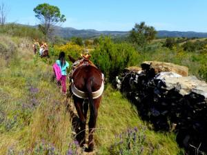 Caminos de burros