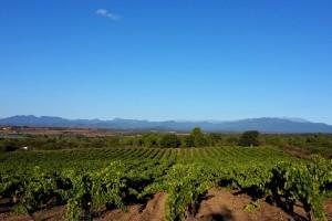 Ruta del vino Emporda