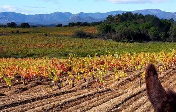 Ruta de 5 díes amb ruc – Ruta del Vi de l'Empordà