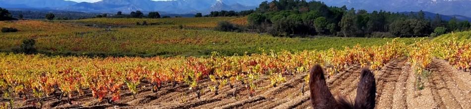 5-Tägige Eselwanderung – Weinroute durch die Empordà