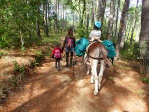 donkeytrekking forest