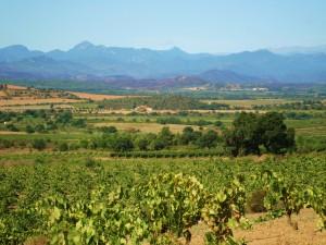 4d Packeselwanderung entlang Weinfeldern-Garriguella