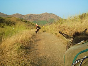 5d Entspannendes Wandern mit Packesel