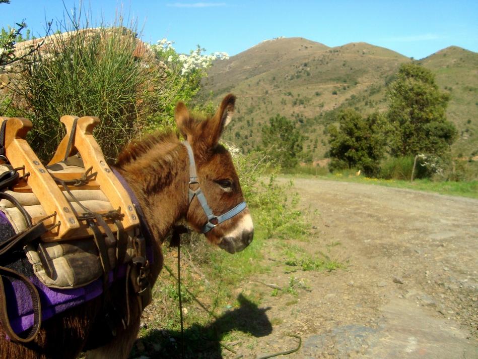 Burrotrek Eselwanderung- Burrotrek rutas con burros- Burrotrek donkey trekking