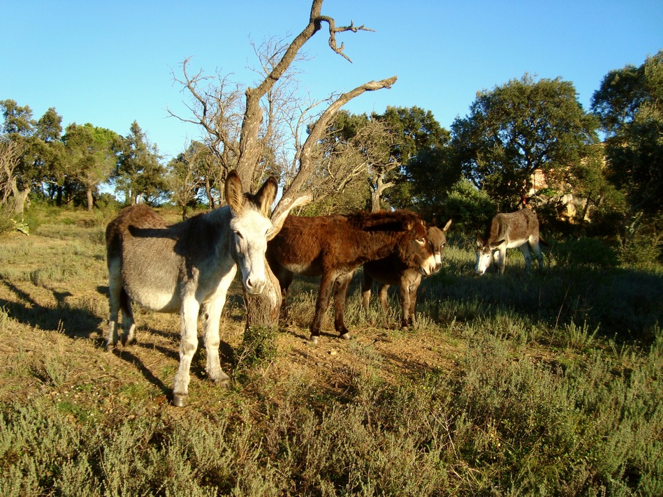 Esel in Spanien- Burros en España- Donkeys in spain