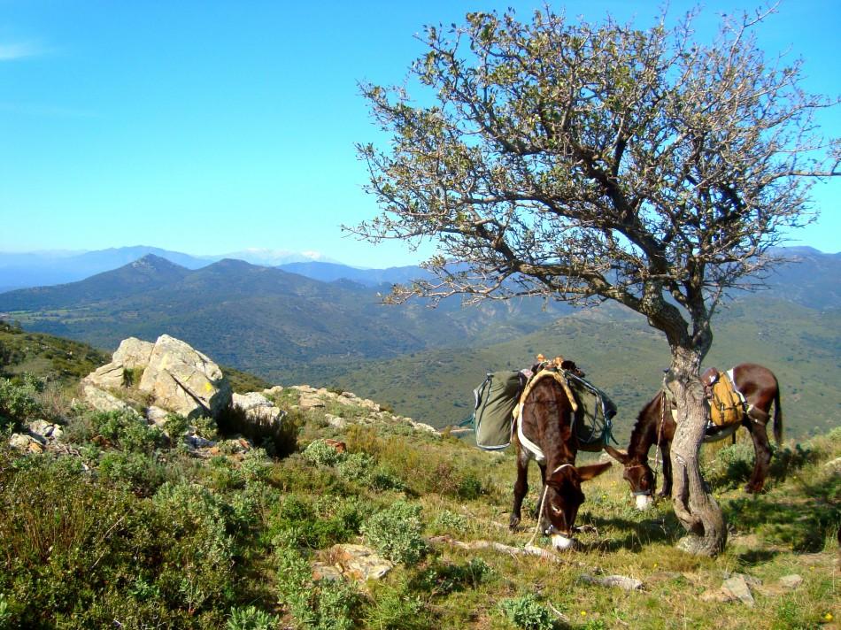 Panoramasicht pyrenäen-vista panoramica Pirineos