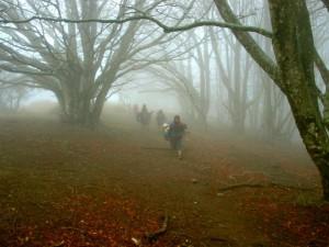 Märchenwald auf Esewanderung