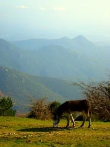 Panorama Alt Empordà auf Eselwanderung