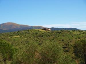 Wandern mit Eseln im Naturpark Albera