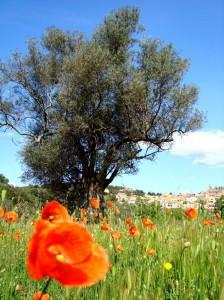 Frühling in Katalonien- Primavera en Catalunya- Spring in Catalonia