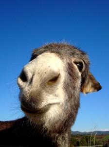 yari says hello!